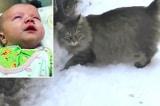 Chú mèo hoang sưởi ấm cho em bé bị bỏ rơi