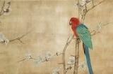 Chim Anh Vũ - Nam Việt điểu