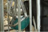 nhà vệ sinh cho bò