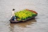 xâm mặn, hoa ngày tết
