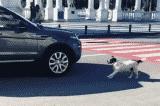 chú chó lang thang