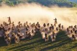Loài ngựa giúp quân Mông Cổ chinh phục lục địa Á-Âu