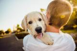 Nghiên cứu: Ngắm những con vật dễ thương có lợi cho sức khỏe