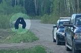 Hai con gấu đen ôm nhau bên đường dưới sự bảo hộ của cảnh sát Canada