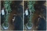 Khởi tố cựu trung úy 'thử súng' khiến nam sinh viên thiệt mạng