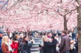 7 triết lý sống khiến người dân Bắc Âu hạnh phúc nhất thế giới